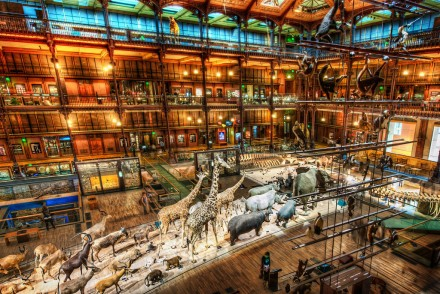 The-Museum-of-Natural-History-XL